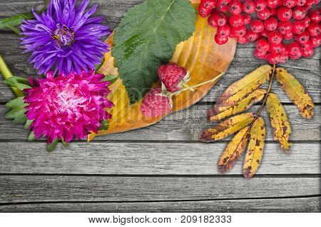 autumn flowers with yellow leaves Rowan berries and two raspberries lying on a wooden surface. Create autumn mood.