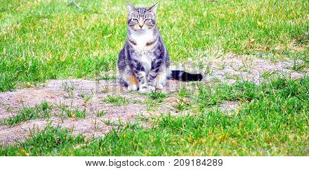 Cat sitting on a wooden log in the front yard outdoors.