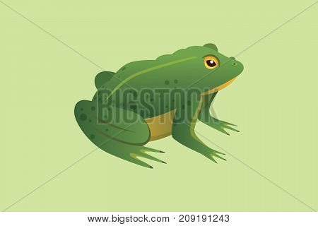 Frog Cartoon Vector Illustration isolated. tropical animal.