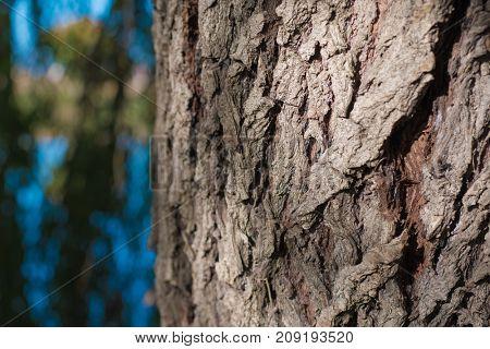 Bark, close up details of forest