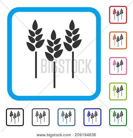 Wheat Ears icon. Flat gray pictogram symbol in a light blue rounded frame. Black, gray, green, blue, red, orange color additional versions of Wheat Ears vector. Designed for web and app interfaces.