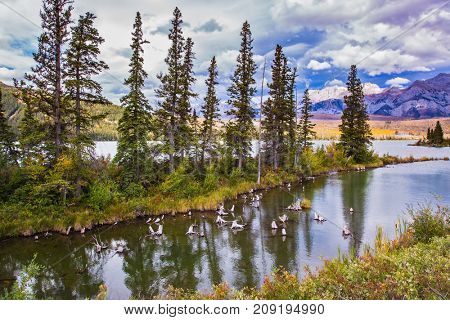 Rocky Mountains, Canada. The valley along the Pocahontas road. Shallow-water lakes, picturesque firs and distant mountains. Concept of car and ecological tourism