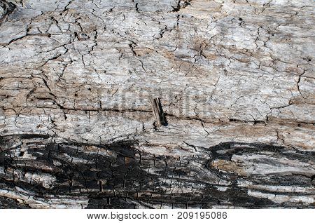 Old weathered grunge dry wooden tree log surface closeup as natural background