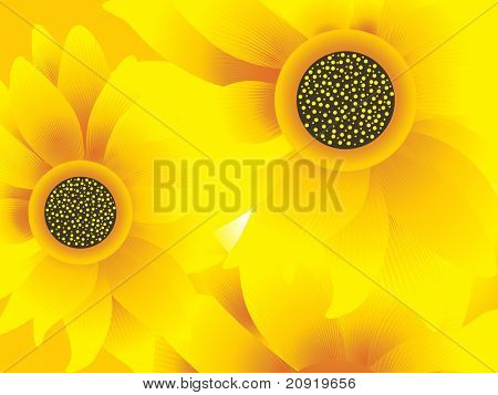 closeup view of sunflowers, vector illustration