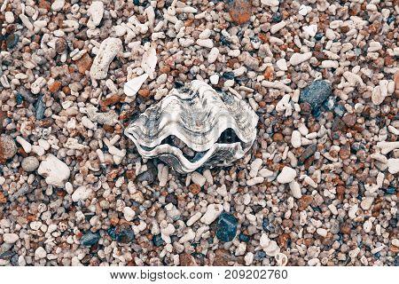 one big sea shell on pebble beach