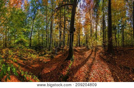 Golden shine autumn panorama scene in the forest, the morning sun shining through the trees, blue sky in background.