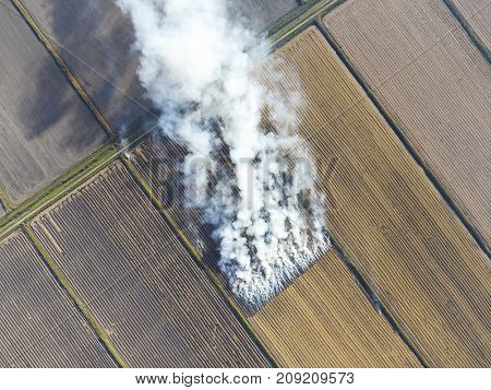 The Burning Of Rice Straw In The Fields. Smoke From The Burning