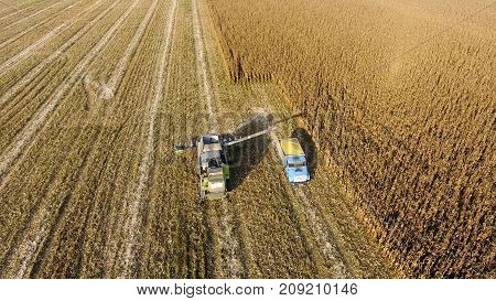 Combine Harvester Pours Corn Grain Into The Truck Body. Harveste