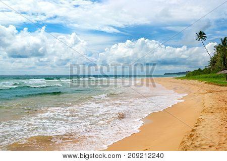 Ocean Beach. Yellow sand and coconut palm. Seascape.