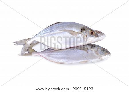fresh whole round Shrimp scad fish on white background