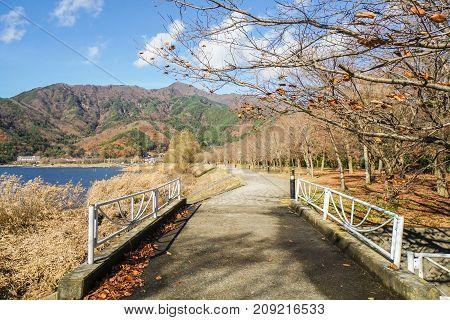 Concrete walkway in public park in autumn season