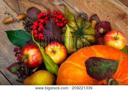 Thanksgiving Background With Pumpkin, Apples, Rowan, Green Squash