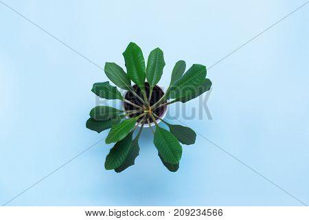 One Object Green Flower In Flowerpot