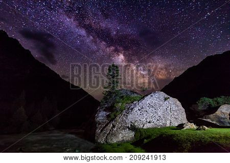 Starry night in the mountains. Lonely tree on a rock.