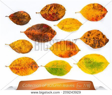 The collection of living green brown bright leaves in points of the sick. Set of autumn leaves on a white background. Plants on the isolated white background. Autumn foliage from a tree December.