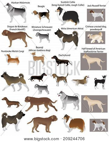 Collection of different breeds of dogs in color