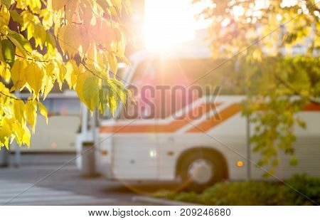 Bus at station framed by autumn colored leaves from trees. Sunny public transportation concept.