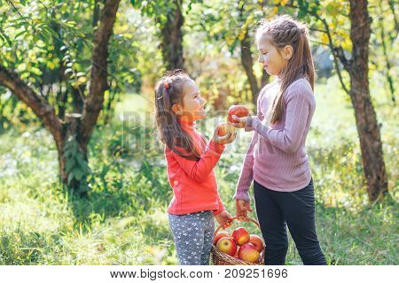 Two little sisters collected a whole basket of fresh red apples in the garden
