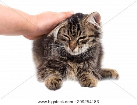 hand caressing a cat on a white background .