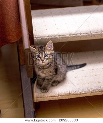 Cute lonely tabby kitten sitting on a stairs and looking up pitifully. Selective focus