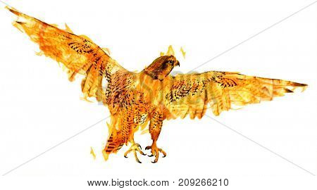 flying flame falcon isolated on white background
