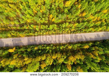 aerial shot of trail in colorful autumn forest