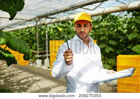 Farming specialist in uniform pointing at green vegetation in hothouse