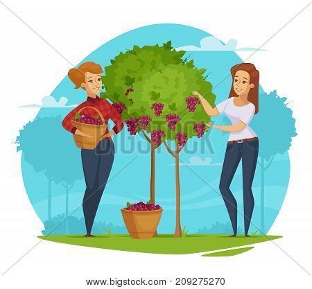 Winery production cartoon composition with two female farmers with baskets harvesting red grapes blue background vector illustration
