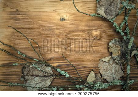 Fallen oak leaves in dry mossy branches on the wooden table surface background with copy space. Autumn foliage.