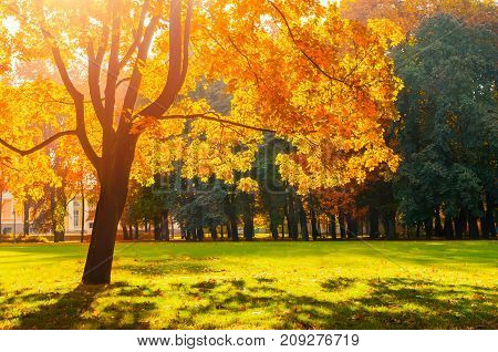 Autumn landscape scene. Sunny autumn park lit by bright sunshine. Autumn trees in the park in sunny autumn weather. Autumn tree under soft sunlight,  autumn park landscape. Colorful autumn nature view of autumn park