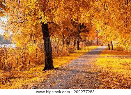 Autumn trees along the park autumn alley in sunny weather. Autumn landscape with colorful autumn trees lit by sunlight. Sunny autumn landscape park. Autumn landscape scene. Autumn nature