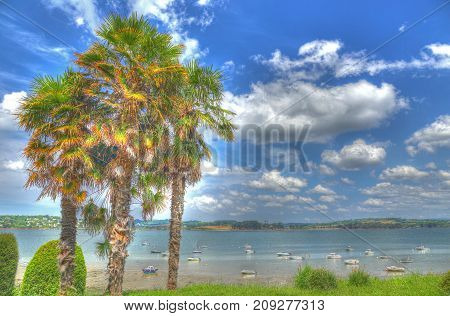 HDR image - palm trees on the promenade of Landevennec Crozon peninsula Finistere Brittany France