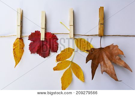 colorful autumn leaves hung on the rope, fall decor for home and garden