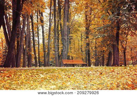 Autumn landscape. Bench under the orange autumn trees in the colorful autumn park. Vintage tones applied. Cloudy autumn landscape scene with autumn trees and fallen autumn leaves in the autumn park. Autumn park landscape