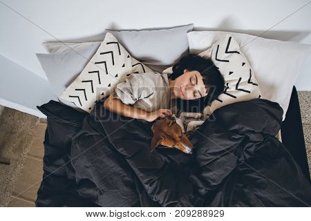 Beautiful young woman or girl cuddles and hugs her best friend basenji puppy dog sleep together under blankets in hipster designer bed on cold day peace and quiet