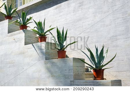 Stairs with flower pots agave. Modern building. Minimal design.