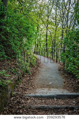 Beautiful climbing path between green leaves in the nature