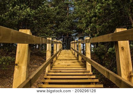Wooden Stairs To Pine Forest In Ogre Blue Hills Park