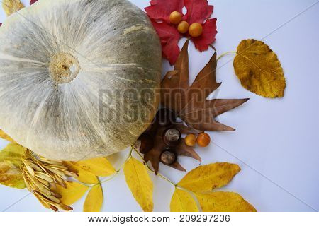 composed of a large pumpkin and colorful autumn leaves on the table