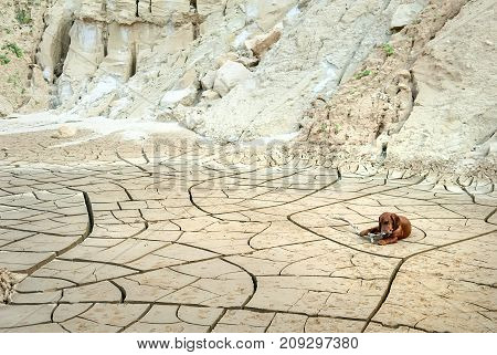 Lonely sad dachshund dog on dry cracked earth
