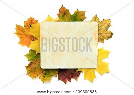 autumn background - old paper texture on the leaves. Clipping path