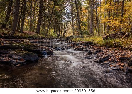Water flows gently over rocks in the forest in Autumn