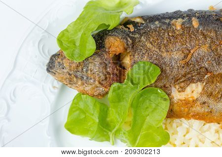 Whole pike perch with green salad on white plate