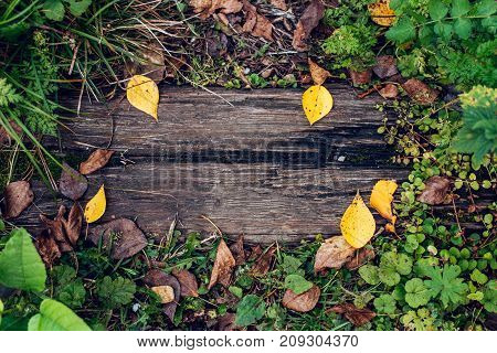 A beautiful wooden background, leaf of yellow green autumn day nature, a cracked plank ground. Texture background for writing text. The concept autumn nature. Fallen foliage background with flowers.