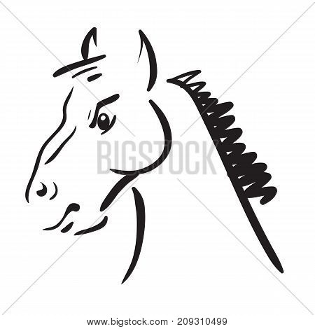 Horse head sketch isilated on white background