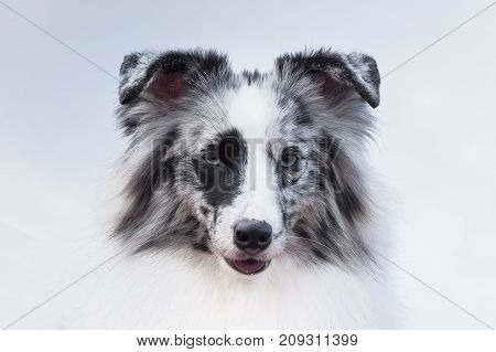 Hunting dog head looks into the camera close-up. Space under the text. 2018 year of the dog in the eastern calendar Concept: friend, protection, loyalty, vigilance, security