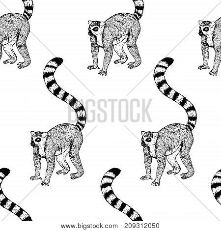 Hand drawn background with lemur. Vector seamless pattern. Vintage style. Doodle line graphic design. Black and white drawing mammal. Vector sketch.