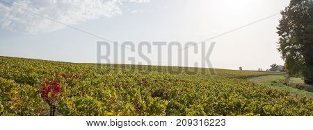 Panorama Of Summer Day In Medoc Vineyards At Bordeaux