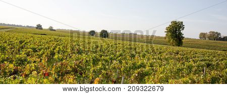 Panorama Of Wineyards In Bordeaux Area, France, Europe