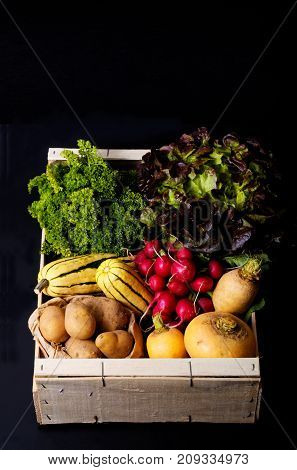 Organic food concept assortment vegetables in wood crate potatoes, Delicata Squash, yellow turnip, radish, red salad, parsley on black background with copy space
